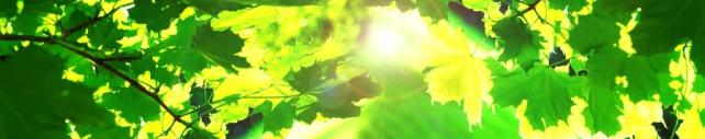 Природа_808