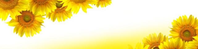 Цветы и растения_103