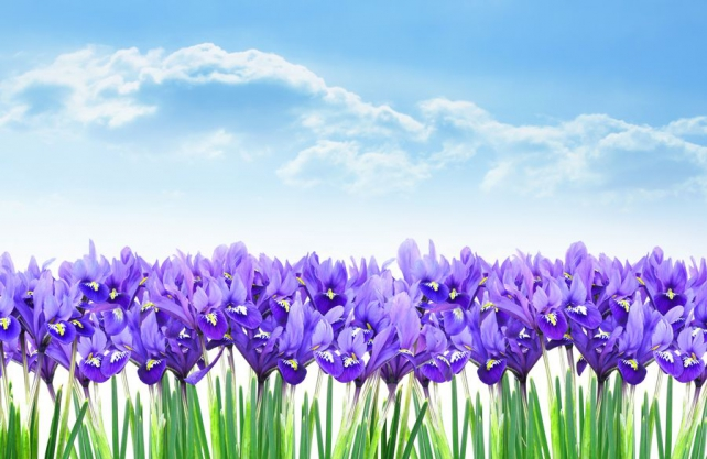 Цветы и растения_104