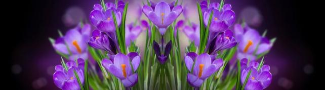 Цветы и растения_107