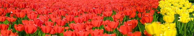 Цветы и растения_10