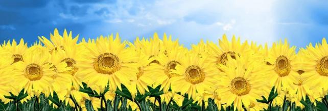 Цветы и растения_123