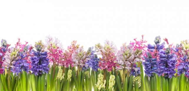 Цветы и растения_124