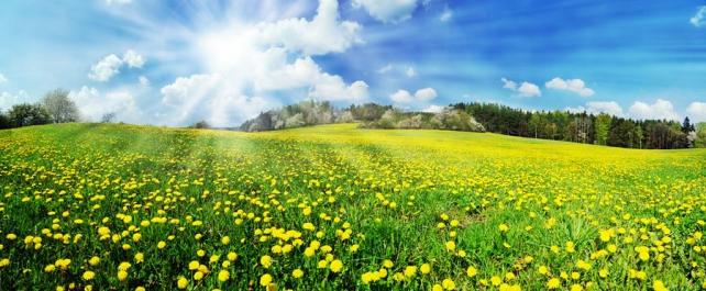 Цветы и растения_131