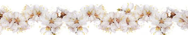 Цветы и растения_138