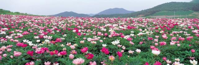 Цветы и растения_139