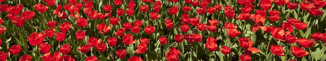 Цветы и растения_13