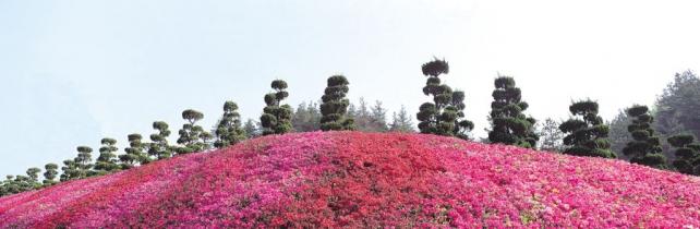 Цветы и растения_140