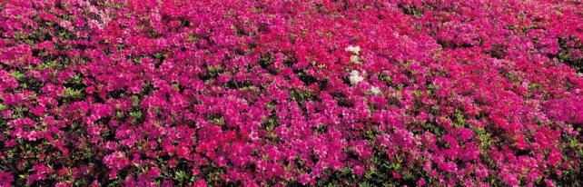 Цветы и растения_141