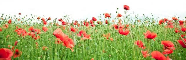 Цветы и растения_142