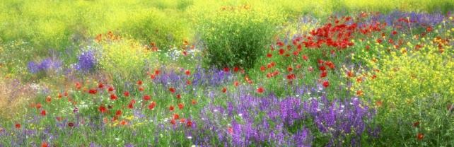 Цветы и растения_147