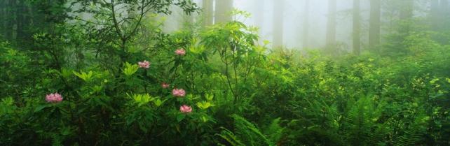 Цветы и растения_154