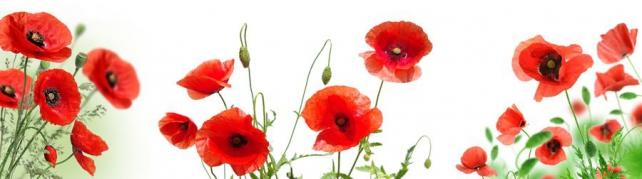 Цветы и растения_163