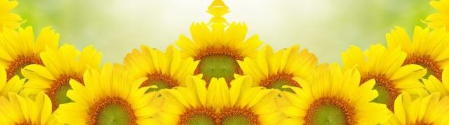 Цветы и растения_166