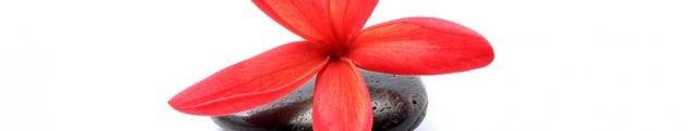 Цветы и растения_182