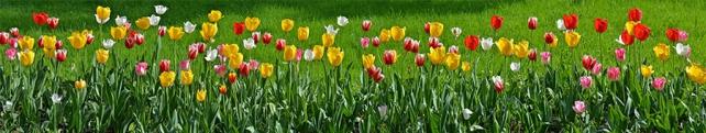 Цветы и растения_193