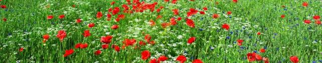 Цветы и растения_196