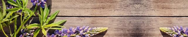 Цветы и растения_197