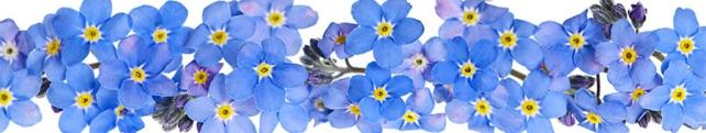 Цветы и растения_198