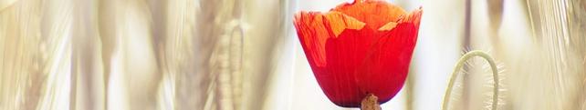 Цветы и растения_19