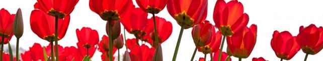 Цветы и растения_201