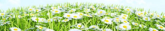 Цветы и растения_202