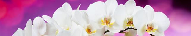 Цветы и растения_207