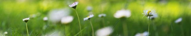 Цветы и растения_209