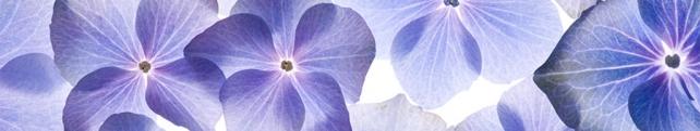 Цветы и растения_216
