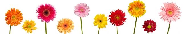 Цветы и растения_222
