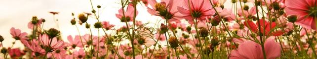 Цветы и растения_240