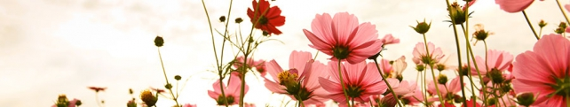 Цветы и растения_241