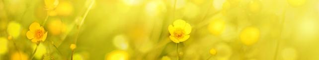 Цветы и растения_249