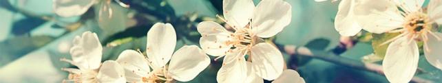 Цветы и растения_250