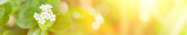Цветы и растения_251