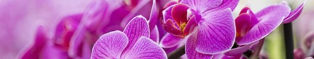 Цветы и растения_253
