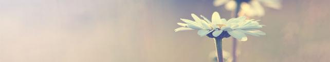 Цветы и растения_259