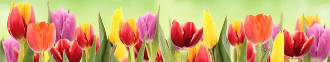 Цветы и растения_25