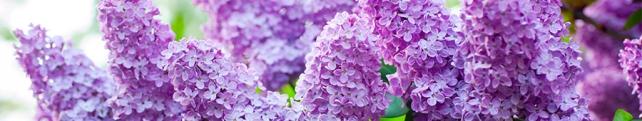 Цветы и растения_260