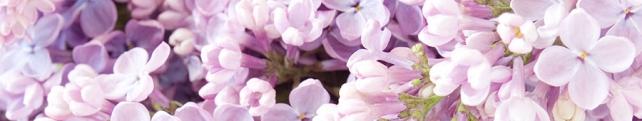 Цветы и растения_261