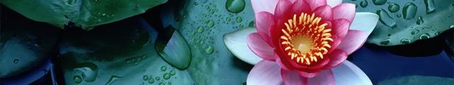 Цветы и растения_264