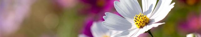 Цветы и растения_266