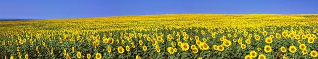 Цветы и растения_274
