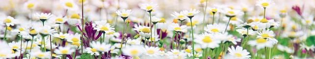 Цветы и растения_27