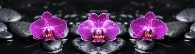 Цветы и растения_284
