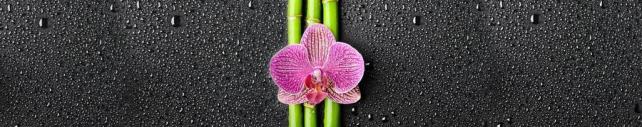 Цветы и растения_285