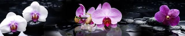 Цветы и растения_286