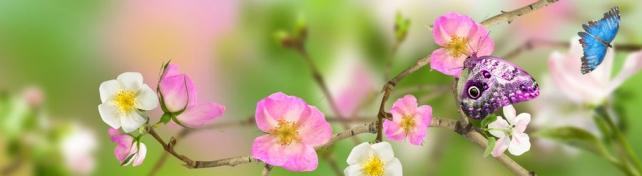 Цветы и растения_295