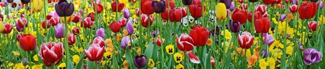 Цветы и растения_29