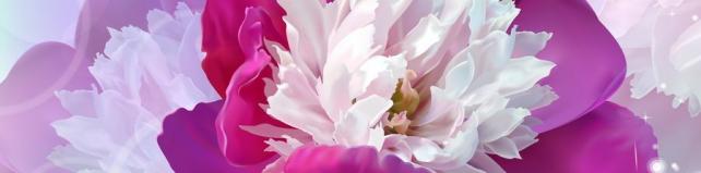 Цветы и растения_300